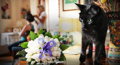 Preventivo Costo Fotografo Matrimonio - Servizio Foto Casa Sposa
